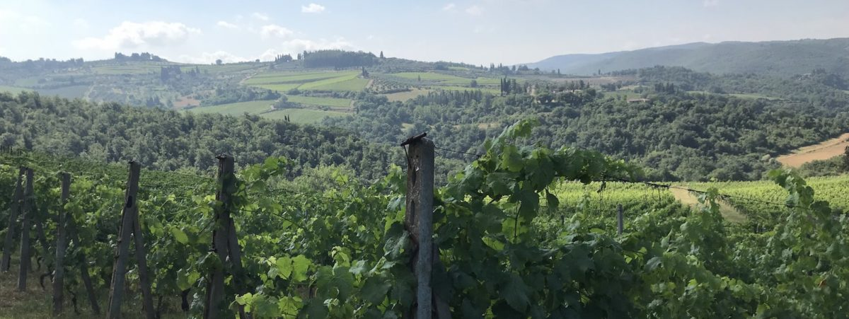 natural wine vineyards italy
