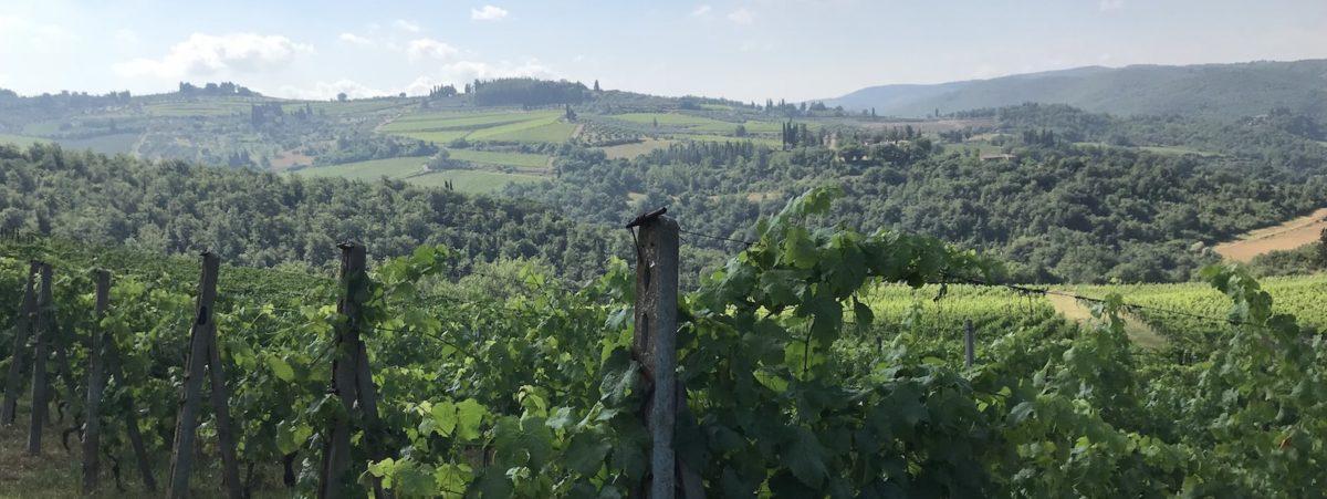 natural wine vineyards italy